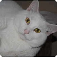 Adopt A Pet :: Chablis - Marion, WI