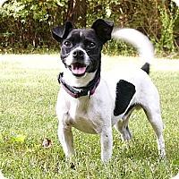 Adopt A Pet :: Ping - Mocksville, NC