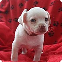 Adopt A Pet :: CUB - san diego, CA
