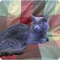 Adopt A Pet :: Kissey - Arlington, VA