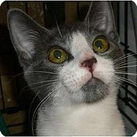 Adopt A Pet :: Purrlina - Brea, CA