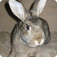 Adopt A Pet :: Elizabeth - Maple Shade, NJ