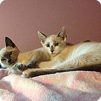 Adopt A Pet :: Sasha & Logan - Monroe, GA