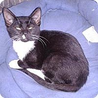 Adopt A Pet :: Tux - Acme, PA