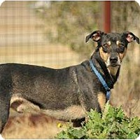 Adopt A Pet :: Nelson - Justin, TX