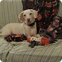 Adopt A Pet :: Marshall - Plainfield, IL