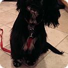 Adopt A Pet :: GEMMA