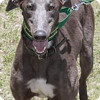 Adopt A Pet :: Raisin - West Palm Beach, FL