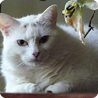 Adopt A Pet :: Missy - Cypress, TX