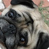 Adopt A Pet :: Hugo - Pismo Beach, CA