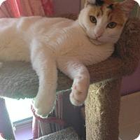 Adopt A Pet :: Vanessa - Mesa, AZ