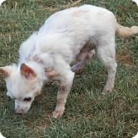 Adopt A Pet :: Gabriel - Matthews, NC