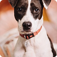 Adopt A Pet :: Molly - Portland, OR