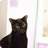 Adopt A Pet :: Mr. Chill - Lincoln, NE