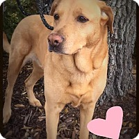 Adopt A Pet :: Jodi - Groton, MA
