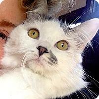 Adopt A Pet :: Bijou - La Jolla, CA