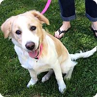 Adopt A Pet :: Jingles - New Oxford, PA