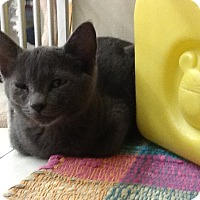 Adopt A Pet :: Ozzy - Warren, OH