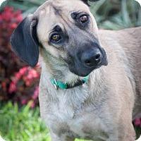 Adopt A Pet :: Hawaii - Gainesville, FL