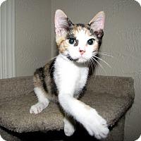 Adopt A Pet :: Princess Fluffy Bottom - Edmond, OK
