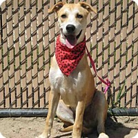 Adopt A Pet :: *SLATER - Norco, CA
