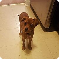 Adopt A Pet :: Coco 2(COURTESY POST) - Baltimore, MD