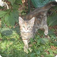 Adopt A Pet :: Bonnie - Newtown, CT