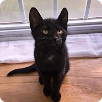 Adopt A Pet :: Binks - Naugatuck, CT