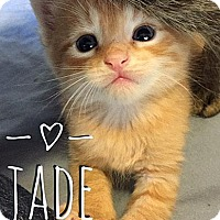 Adopt A Pet :: Jade - Fort Leavenworth, KS