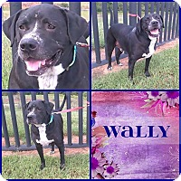 Adopt A Pet :: Wally - Cleveland, GA