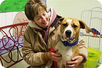 American Bulldog Mix Dog for adoption in Elyria, Ohio - Serious