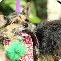 Terrier (Unknown Type, Small) Mix Dog for adoption in Ocean Springs, Mississippi - Baskin