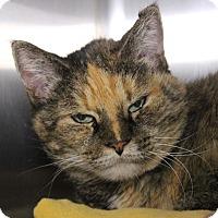 Adopt A Pet :: Mizzy - Middletown, CT