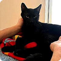 Adopt A Pet :: Bertie - East Stroudsburg, PA