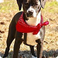 Adopt A Pet :: Sugar - Haggerstown, MD