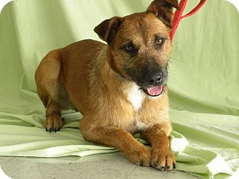 Shepherd (Unknown Type)/Terrier (Unknown Type, Medium) Mix Dog for adoption in Princeton, Kentucky - Remus Lupin