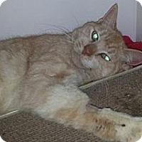Adopt A Pet :: Butternut - Oviedo, FL