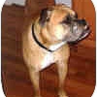 Adopt A Pet :: Magnus - Sunderland, MA