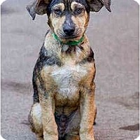 Adopt A Pet :: Dean - Portland, OR