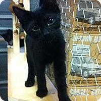 Adopt A Pet :: Shadow - Spotsylvania, VA