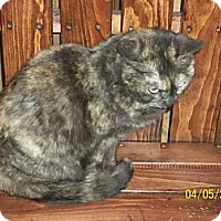 Adopt A Pet :: torties - Oxford, NY