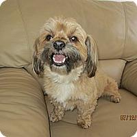 Adopt A Pet :: Charlie - Culver City, CA