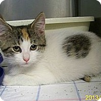 Adopt A Pet :: Mazzy - Dover, OH