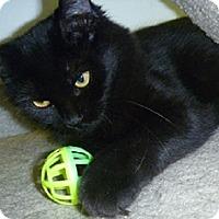 Adopt A Pet :: Penny Lane - Hamburg, NY