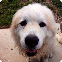 Adopt A Pet :: CASPER - Coudersport, PA