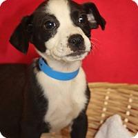 Adopt A Pet :: Tate - Waldorf, MD