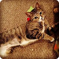 Adopt A Pet :: Natalia - Trenton, NJ
