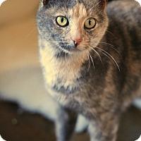 Adopt A Pet :: Noel - McCormick, SC