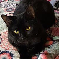 Adopt A Pet :: Jaxson - Salisbury, NC