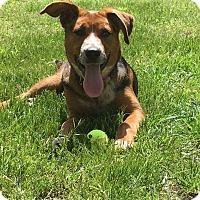 Adopt A Pet :: Cheyenne - Austin, TX